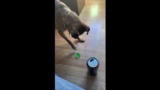 Chihuahua makes it clear he doesn't like jello