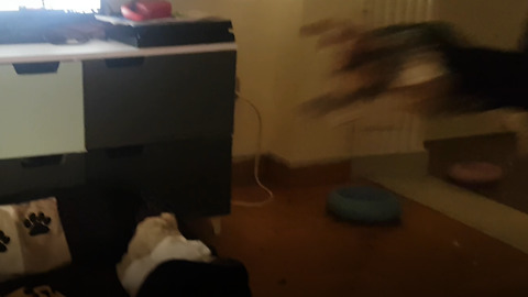 Crazy dog flying to get on her bed