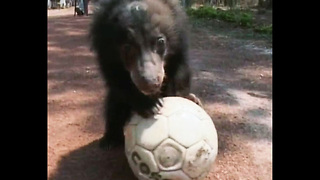 Animal Soccer - Comp - Video