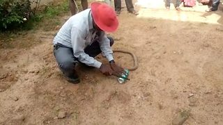 Amazing Video Shows Four Feet Long Cobra Being Rescued After Its Head Got Stuck In Soft Drink Can - Video