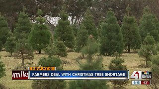 Kansas City metro could see Christmas tree shortage this year