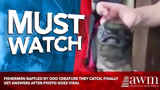 Fishermen Baffled By Odd Creature They Catch, Finally Get Answers After Photo Goes Viral - Video