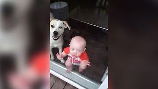 12 Hilarious Babies Kissing Windows
