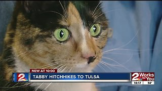 Tabby cat hitches ride from Mustang to Tulsa