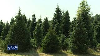White House selects Christmas tree from Shawano - Video