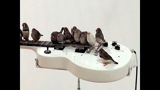 Rock 'n' Roll Birds - Video