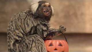 Zoo Animals Get Ready for Halloween With Gross Treats - Video
