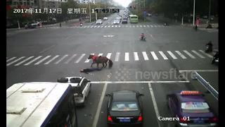Car knocks down horse running red light - Video