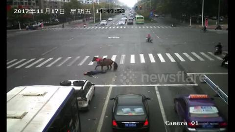 Car knocks down horse running red light