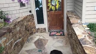 Dog expertly opens and closes doors - Video