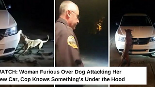 Woman Furious Over Dog Attacking Her New Car, Cop Knows Something's Under the Hood - Video