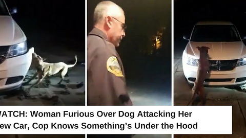 Woman Furious Over Dog Attacking Her New Car, Cop Knows Something's Under the Hood