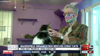 Kern's Kindness: The Cat People and Pawsitively Cats Sanctuary