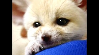 2009's Cuddliest Creatures - Video