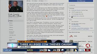 Three arrested in cattle thefts - Video