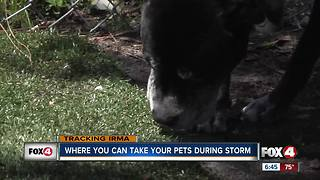 Where you can take your pets in a storm