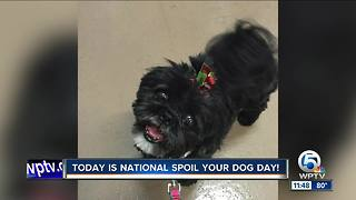 Millie on the News - Video