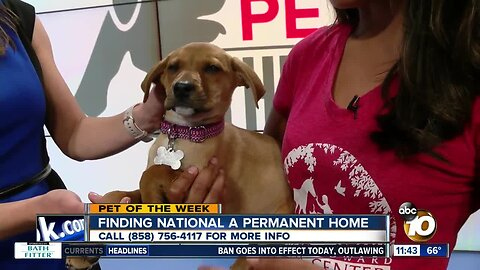 10News Pet of the Week: National