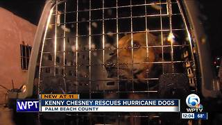 Kenny Chesney rescues hurricane dogs - Video