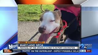 Good morning from the Maryland SPCA and Diamond! - Video