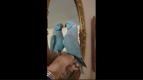 Talking Parrot Has A 'Profound' Conversation With Himself In The Mirror