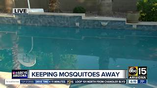 Pest expert talks summer bug safety - Video