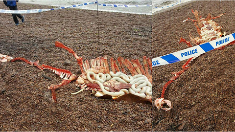 Body Parts Of The Loch Ness Monster Found In Loch Ness