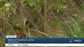 Waking up with animals at Naples Zoo