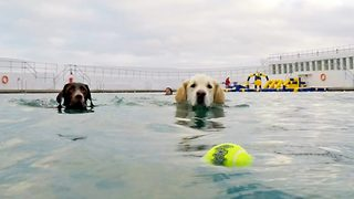 Doggy paddle – Dogs allowed into public pool for first time ever - Video