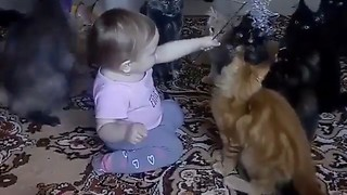Maine Coons delightfully entertained by baby girl