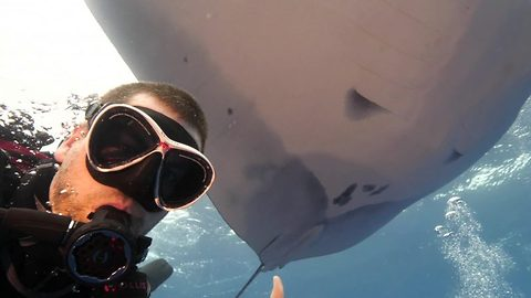 Diver swims with manta rays in mesmerising video clip