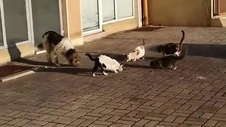 Friendly cats share meal with stray dog - Video