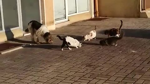 Friendly cats share meal with stray dog