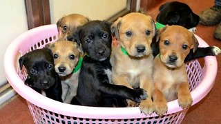 Seven Cute Puppies Abandoned This Christmas