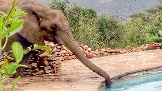Cheeky elephant caught drinking from swimming pool - Video
