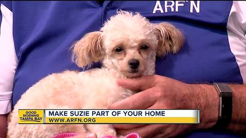 Rescues in Action July 21, 2018: Suzie seeks furever home