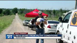 Pets rescued from