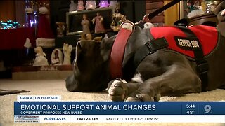 No more emotional support animals on planes? The government wants to hear from you!
