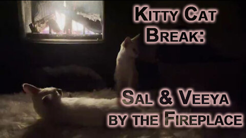Kitty Cat Break: Sal & Veeya, Lynx Balinese Kittens Playing, Chilling & Cleaning by Fireplace [ASMR]