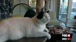 Cat cafe clip - Video