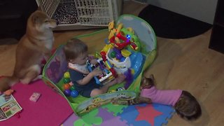 Dog, cat & baby preciously play with toys together