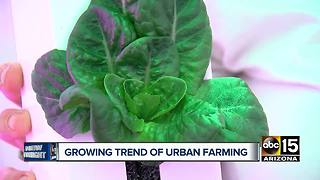Growing trend of urban farming in the Valley - Video