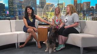 I Heart Dogs Rescue and Animal Haven open house fundraiser - Video