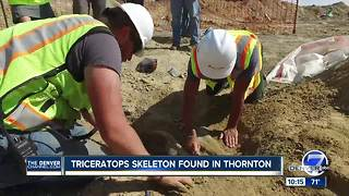 PHOTOS: Rare triceratops fossil found in Thornton at construction site - Video