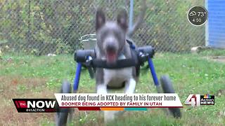 Abused dog in KCK heading to 'furever' home - Video