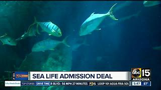 Book online to save at SeaLife - Video