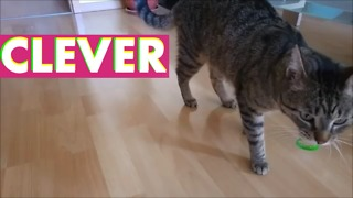 Cat's favorite game is not what you'd expect - Video
