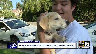 Puppy reunited with owner after two weeks