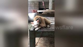 Monkey hugs cat to keep warm - Video