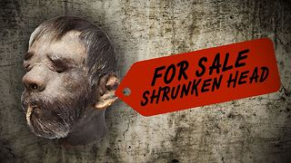 Got 50K to spare? Why not buy a real shrunken head! - Video